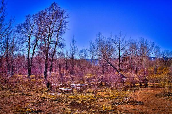 Photograph - South Platte Park Landscape by David Patterson