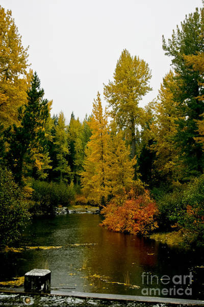 Truckee River Photograph - South Upper Truckee Fall by Mitch Shindelbower