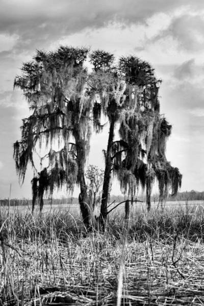 Photograph - Southern In Black And White by JC Findley