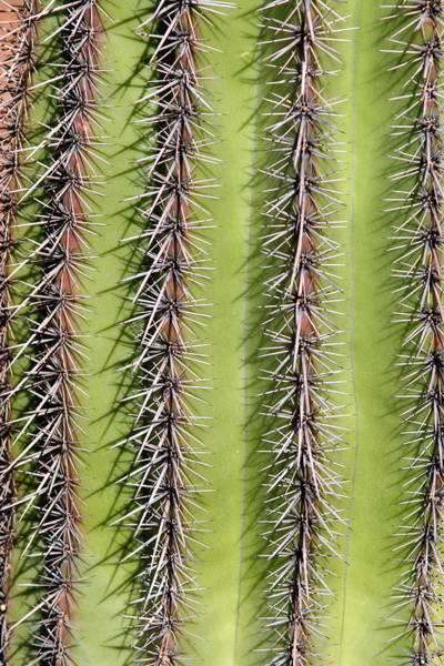 Photograph - Southwest Saguaro Cactus Close-up  Vertical by James BO Insogna