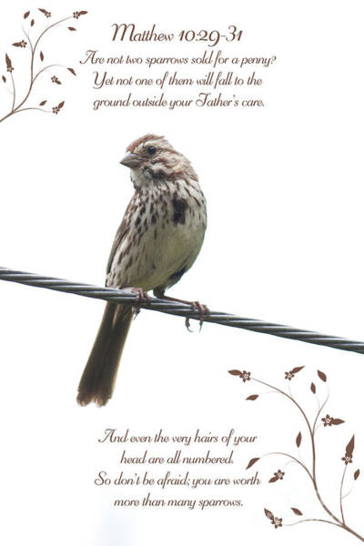 Wall Art - Photograph - Sparrow by Lena Auxier
