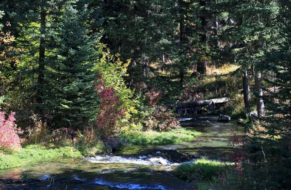 Photograph - Spearfish Canyon by Donald J Gray