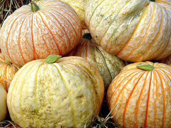 Photograph - Speckled Pumpkins by Jeff Lowe
