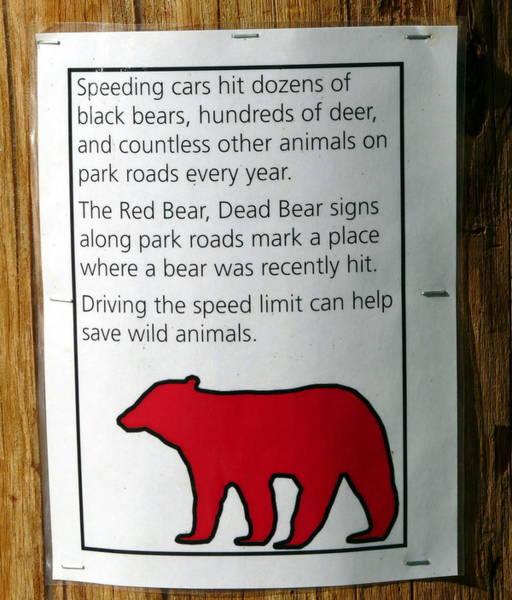 Photograph - Speed Kills Yosemite Animals by Jeff Lowe