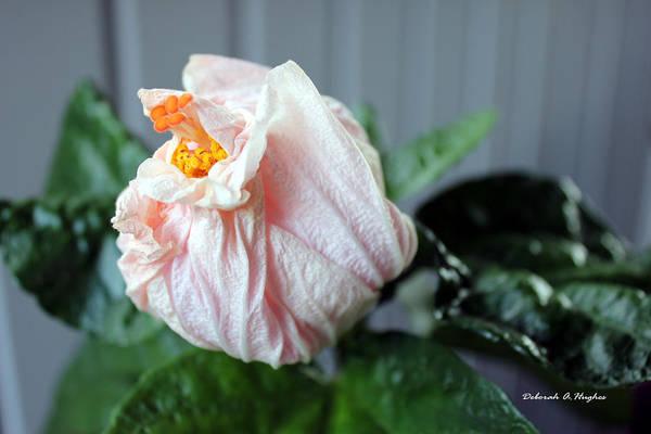 Photograph - Spent by Deborah Hughes