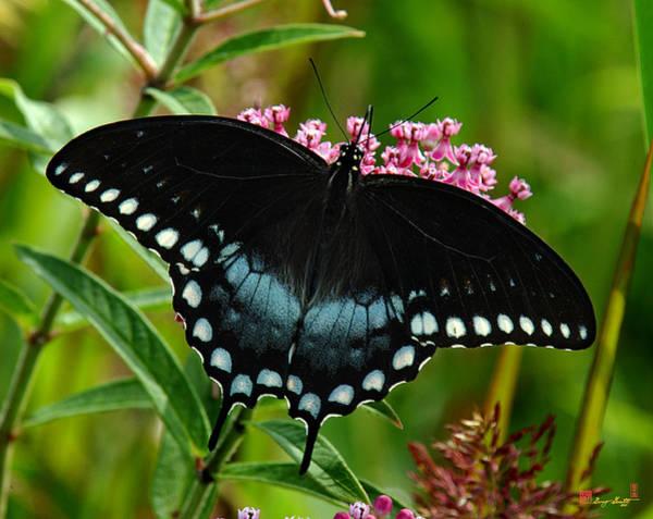 Photograph - Spicebush Swallowtail Din038 by Gerry Gantt