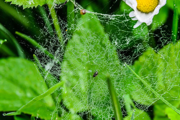 Photograph - Spider And Its Web by Michael Goyberg