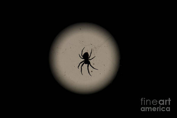 Photograph - Spider In Front Of Moon by Donna L Munro