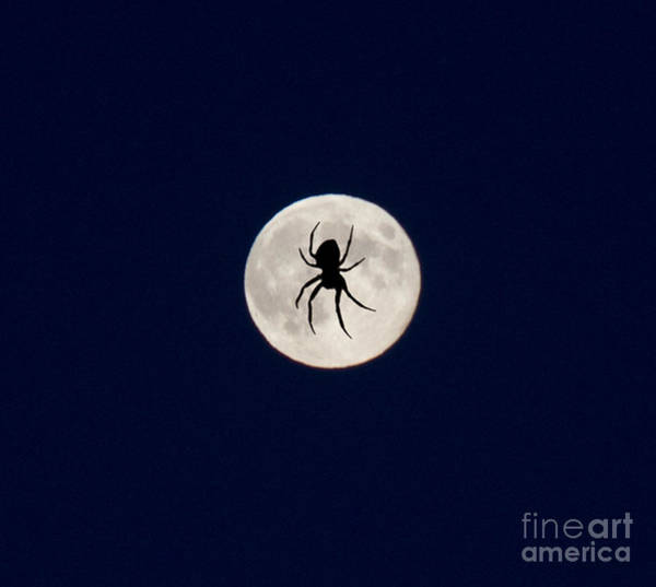 Photograph - Spider On The Moon by Donna L Munro