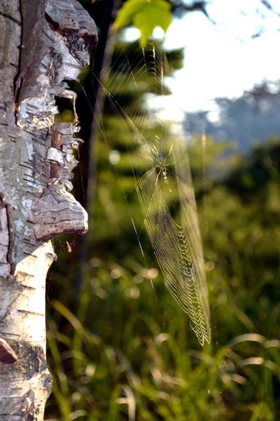 Photograph - Spider Web In Morning Light by Michelle Calkins