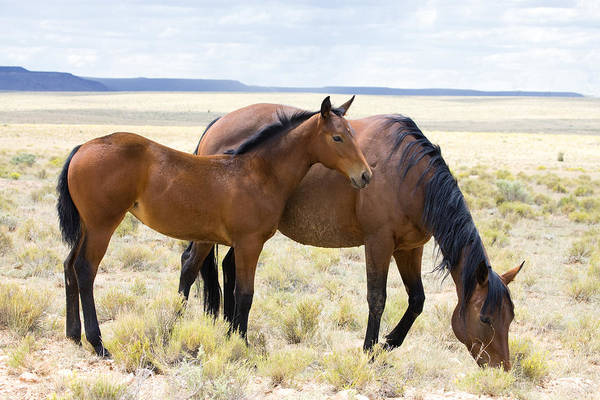 Mare And Foal Photograph - Spiderweb Stock by Dewain Maney
