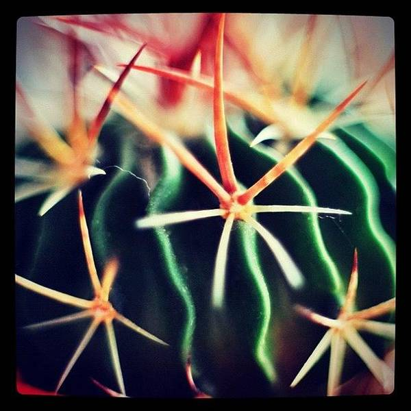 Wall Art - Photograph - #spikes #green #plant #igaddict by Ritchie Garrod