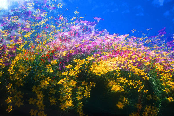 Wall Art - Photograph - Spinning Flowers by David Smith
