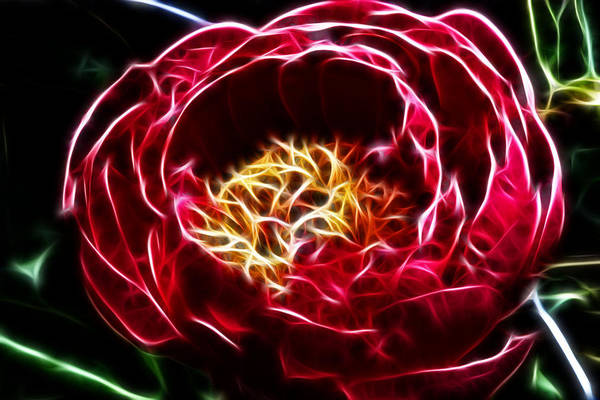 Camelia Photograph - Spirit Of The Flower by Joetta West