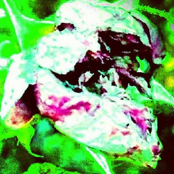 Abstract Flowers Wall Art - Photograph - Spirit Of The Rose (face In Lower by Marianne Dow