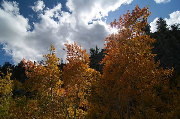 Photograph - Splendid Fall Aspens - Eastern Sierras by Kim Hawkins Eastern Sierra Gallery