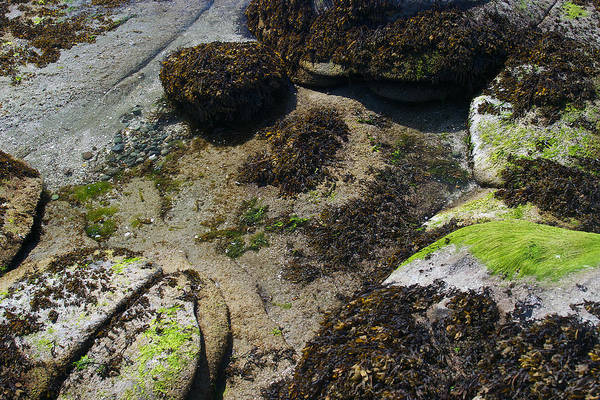 Photograph - Split Rock Green 5 by David Kleinsasser