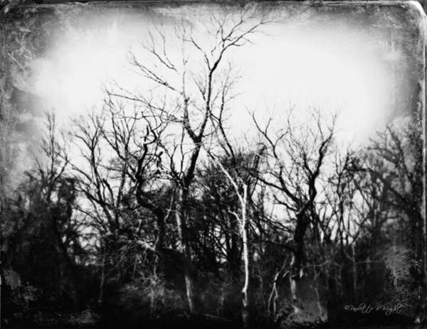 Photograph - Spooky Forest by Paulette B Wright