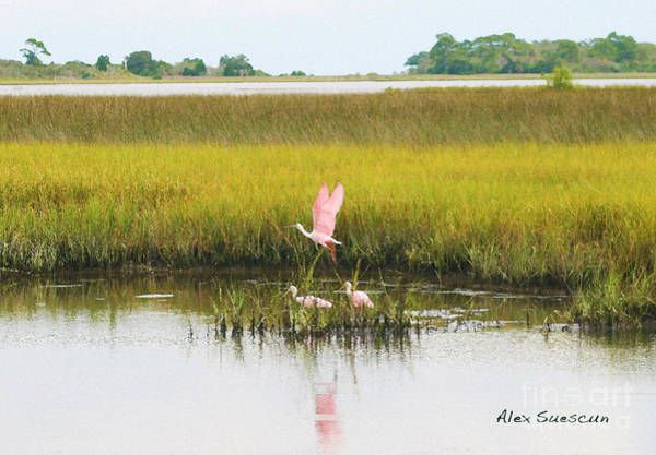 Water Foul Painting - Spoonbill Savannah by Alex Suescun