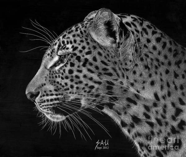 Scratchboard Drawing - Spotted Solitude by Sheryl Unwin