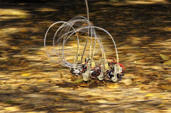 Biomimetics Wall Art - Photograph - Sprawlita Cockroach Robot by Volker Steger