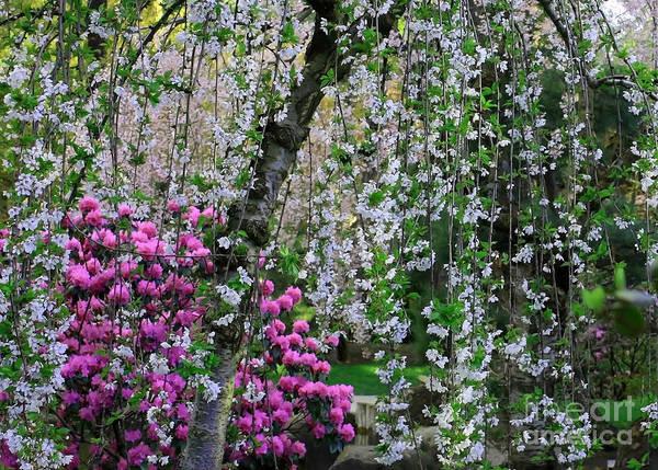 Photograph - Spring Abundance by Carol Groenen