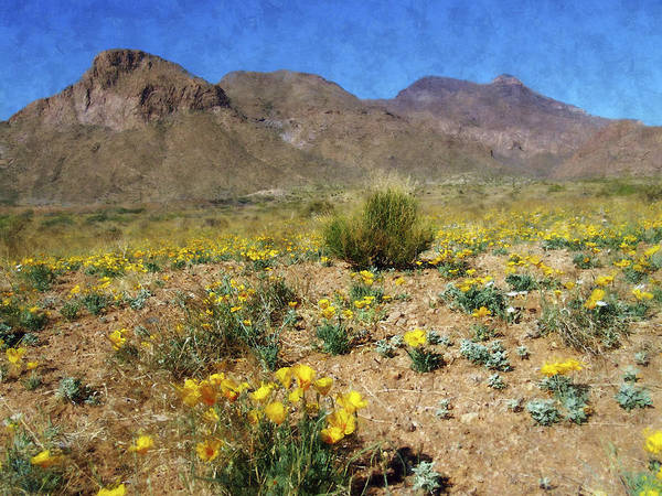 Photograph - Spring Bloom Franklin Mountains by Kurt Van Wagner
