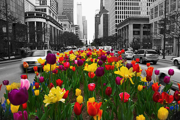 Michigan Ave Photograph - Spring Bloom by Jeff Lewis