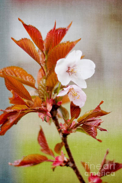 Wall Art - Photograph - Spring Bloom by Violet Gray