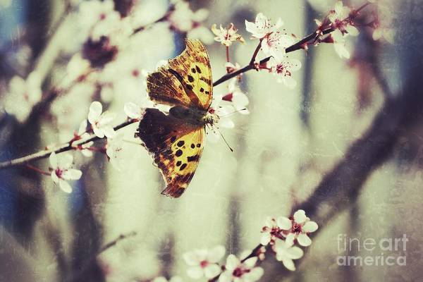 Photograph - Spring Butterfly by Traci Cottingham