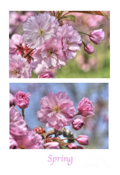 Photograph - Spring by David Birchall