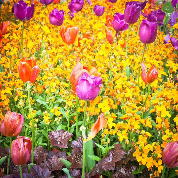 Flower Beds Photograph - Spring Flowers by Tom Gowanlock