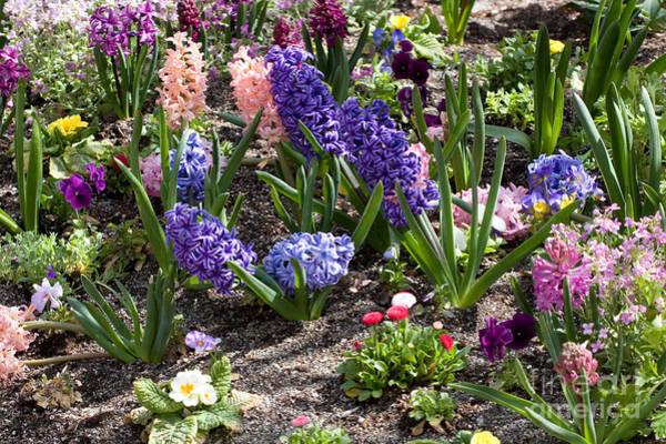 Photograph - Spring Garden by Cindy Singleton