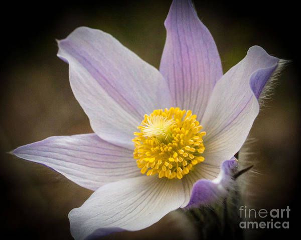 Photograph - Spring Gem by Katie LaSalle-Lowery