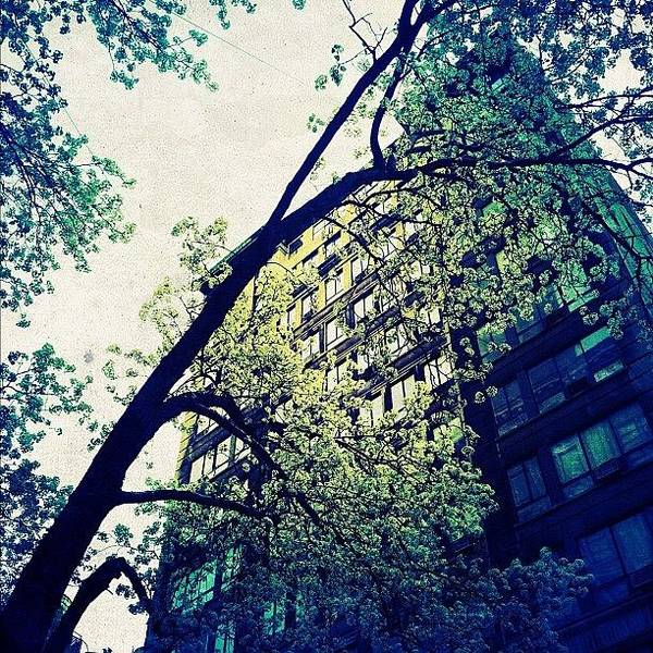 Spring Photograph - Spring In Manhattan by Natasha Marco