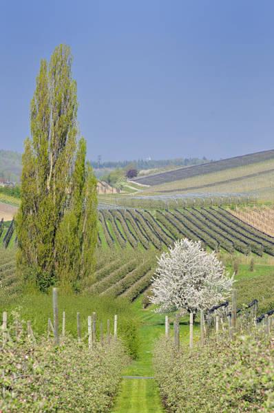 Photograph - Spring Landscape by Matthias Hauser