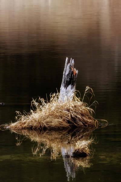 Photograph - Spring Marsh Stump by Albert Seger