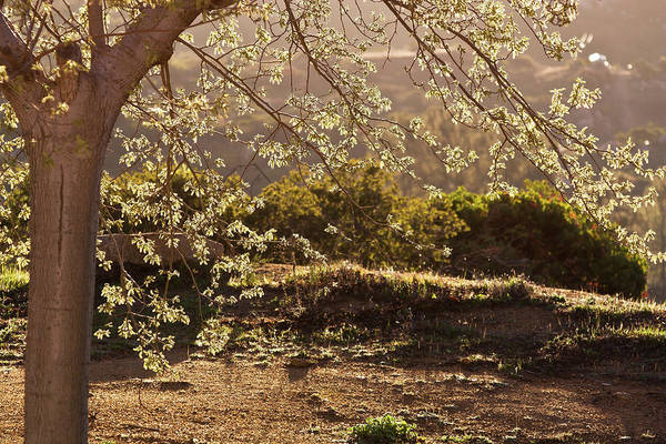 Photograph - Spring Morning Light by Peter Dyke