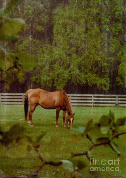 Photograph - Spring Pasture 2 by Bob Senesac