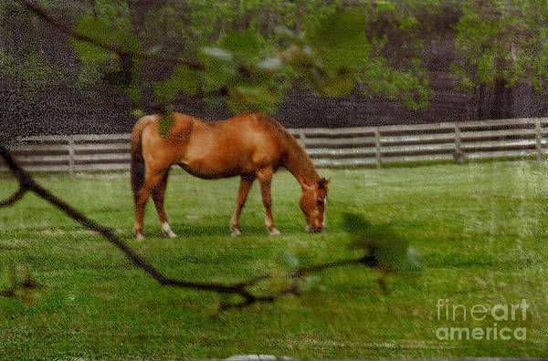 Photograph - Spring Pasture by Bob Senesac