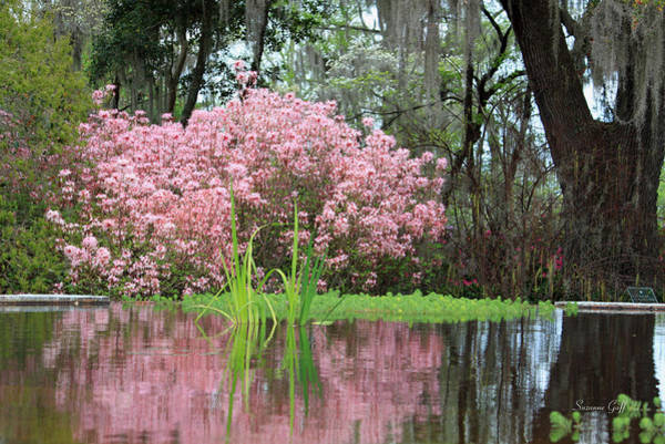 Seasonal Wall Art - Photograph - Spring Pink by Suzanne Gaff