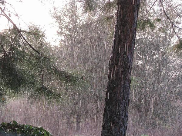 Photograph - Spring Rain by Peg Urban