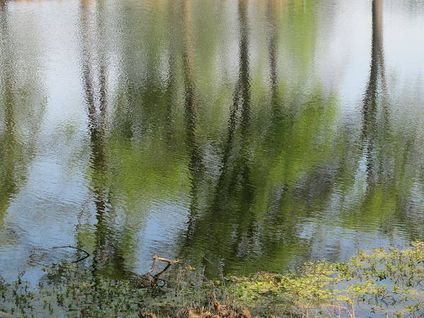 Wall Art - Photograph - Spring Reflections by Valia Bradshaw