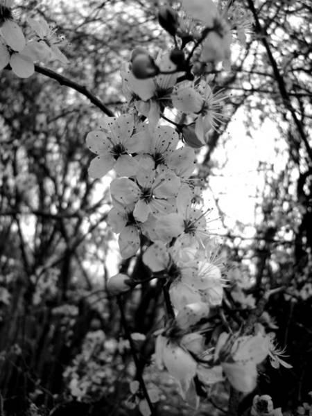 Photograph - Spring by Roberto Alamino