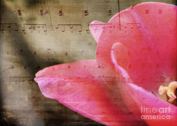 Photograph - Spring Sings by Traci Cottingham