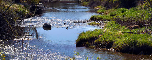 Photograph - Spring Stream by C Sitton