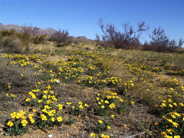 Photograph - Spring Surprise Franklin Mountains by Kurt Van Wagner