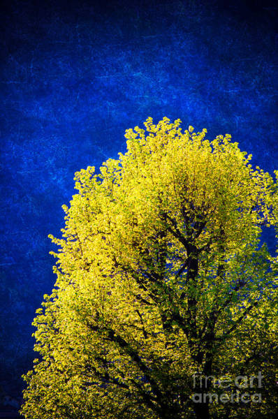 Photograph - Spring Tree by Silvia Ganora