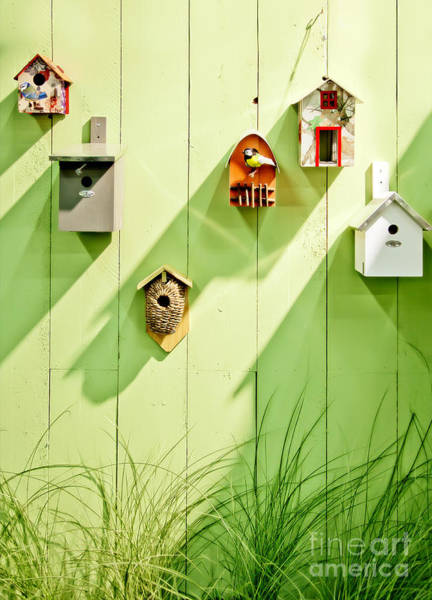 Photograph - Spring Wooden Wall by Ariadna De Raadt