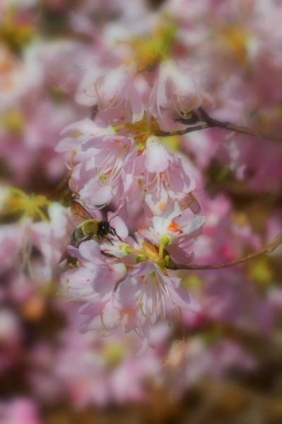 Photograph - Springtime by Joann Vitali